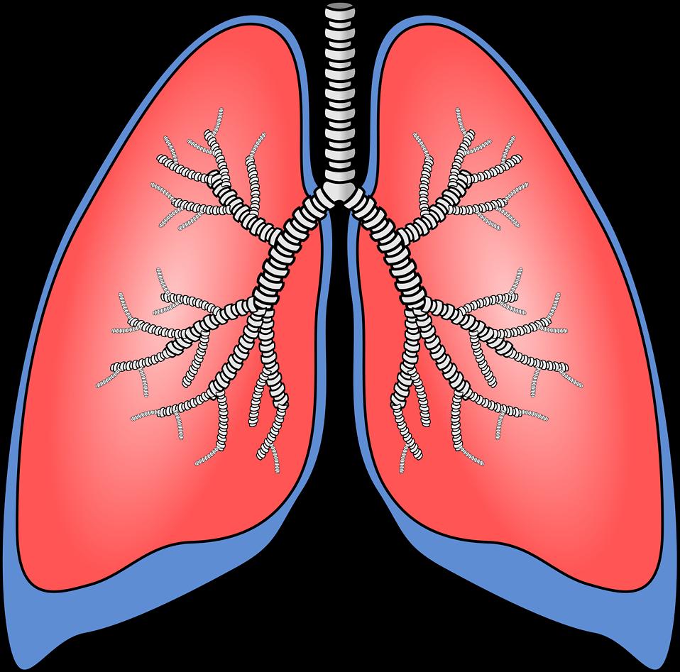 폐암 초기증상