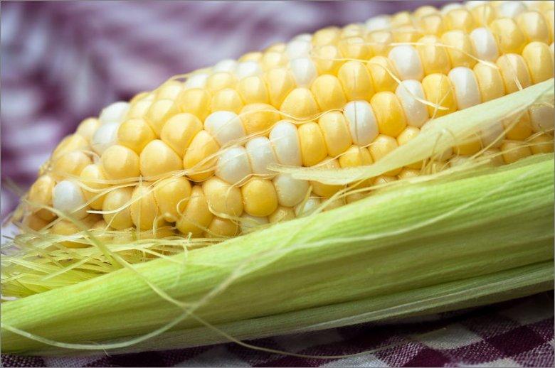 옥수수 효과