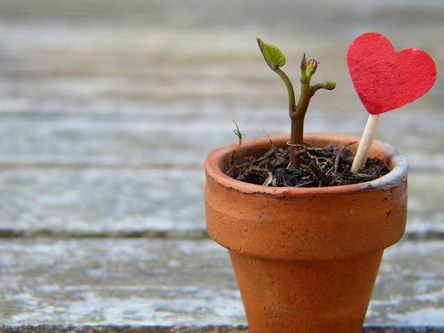 건강에 좋은 식물기르기 효과